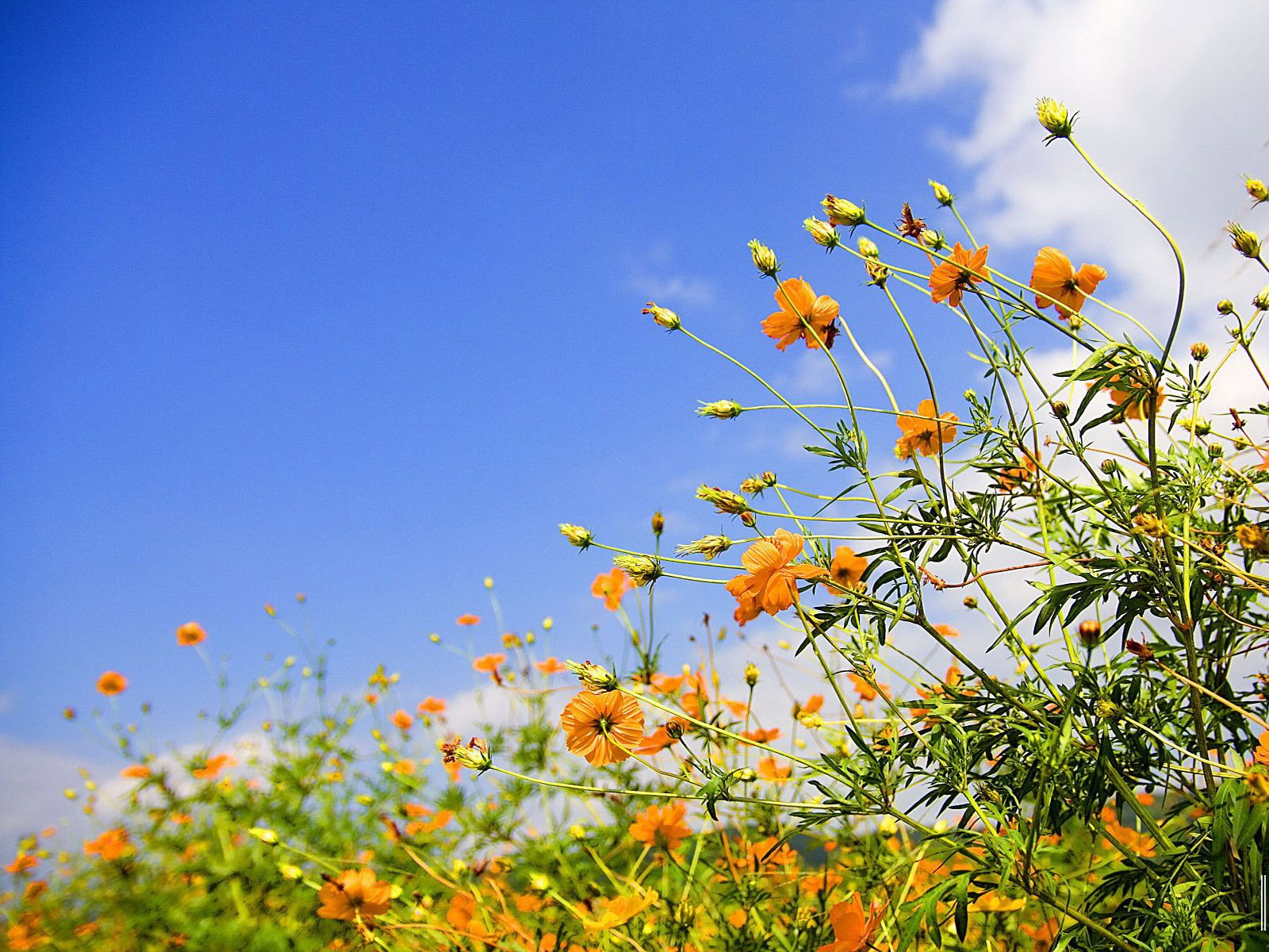 best-spring-picture-hd-image-wallpaper-wp424082-1