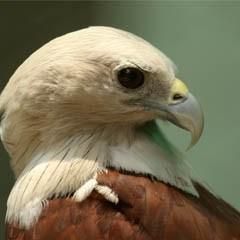 bird-animal-nature-wildlife-photography-Mukesh-Garg-s-unlimi-wallpaper-wp5804047