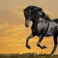 black-horse-running-x-wallpaper-wp5204712