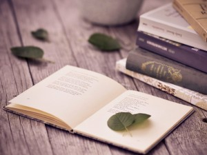 books-in-a-relaxed-place-near-nature-wallpaper-wp4604380