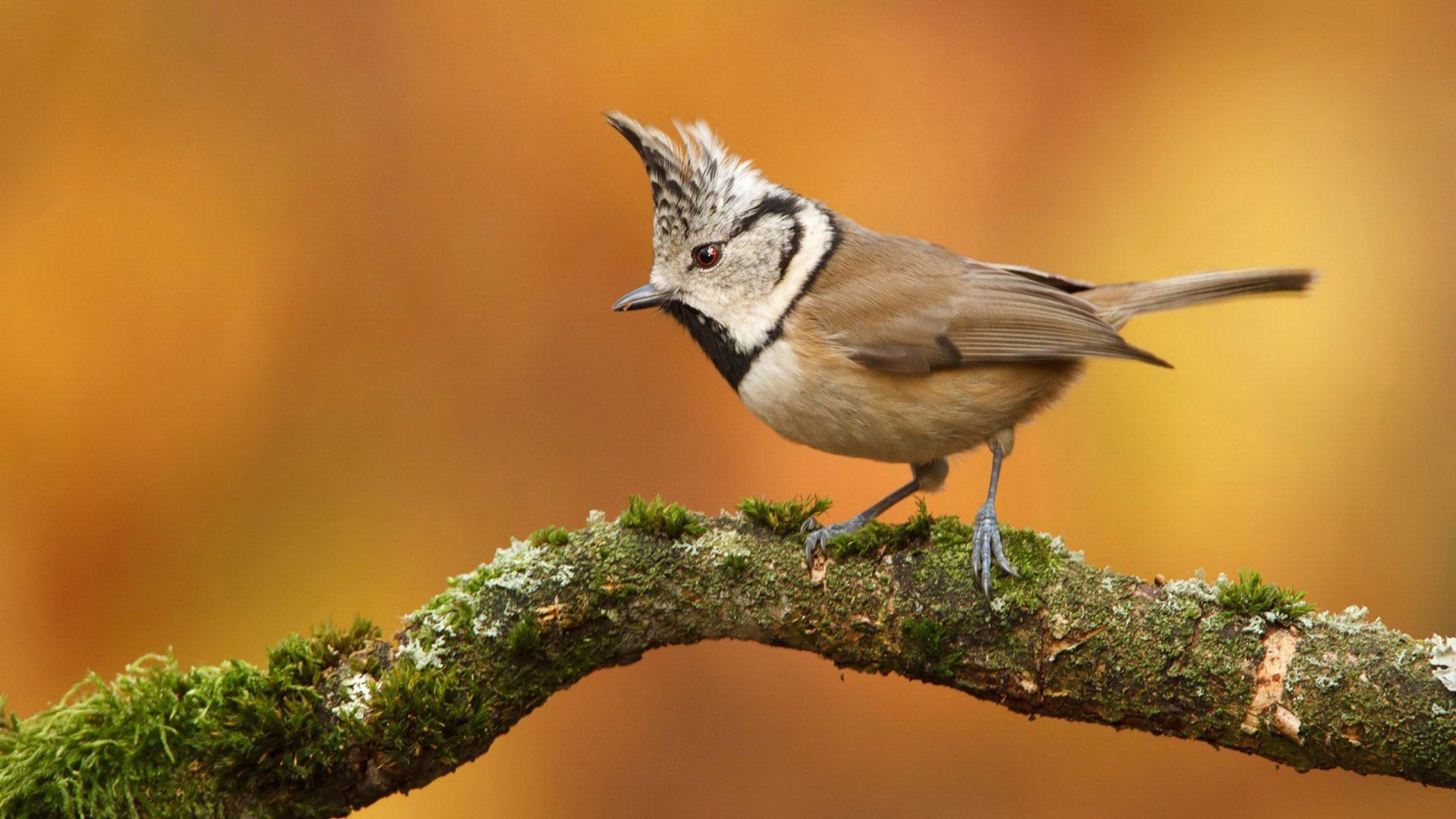brown-bird-1920x1080-Need-iPhone-S-Plus-Background-for-IPhoneSPlus-F-wallpaper-wp3603724