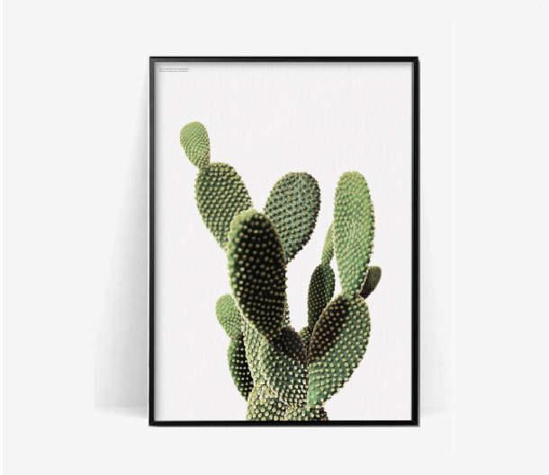 cactus-botanical-poster-print-Cactus-print-plant-print-herb-cacuts-poster-print-botanical-print-cact-wallpaper-wp3603817