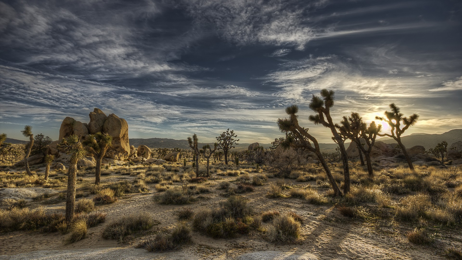 cactus-desert-cloud-california-1920x1080-wallpaper-wp36011995