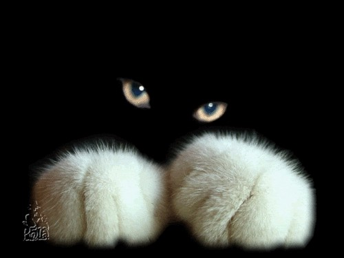 cat-wallpaper-wp5403978