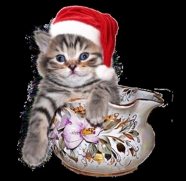 chatons-chats-cat-gato-Katze-katter-kettir-cait-wallpaper-wp5201170