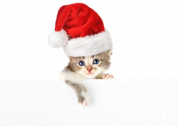 chatons-chats-cat-gato-Katze-katter-kettir-cait-wallpaper-wp5201391
