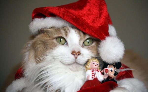 chatons-chats-cat-gato-Katze-katter-kettir-cait-wallpaper-wp5201561