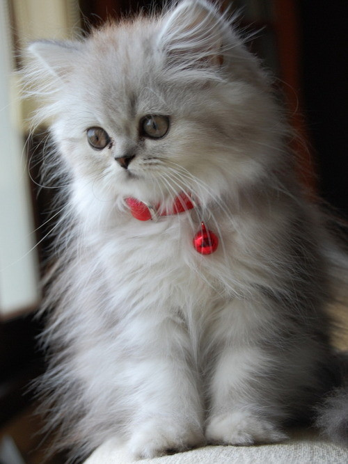 chatons-chats-cat-gato-Katze-katter-kettir-cait-wallpaper-wp520211