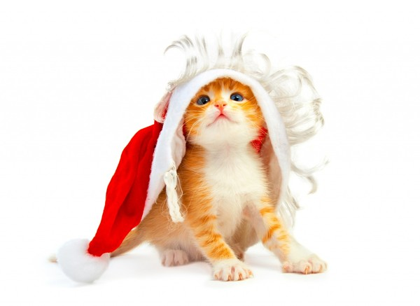 chatons-chats-cat-gato-Katze-katter-kettir-cait-wallpaper-wp5205124