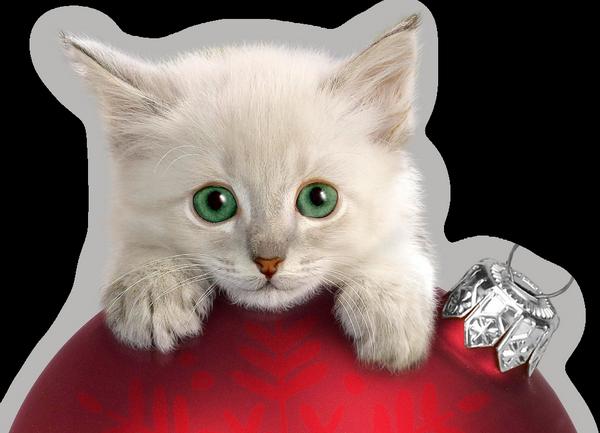 chatons-chats-cat-gato-Katze-katter-kettir-cait-wallpaper-wp520857