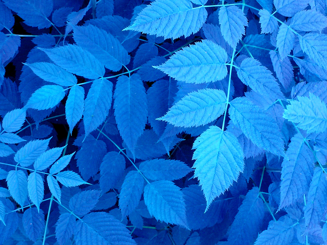 close-up-leaves-plants-x-wallpaper-wp5006136
