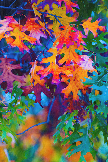 color-cravings-beautiful-fall-colors-God-really-loves-colors-this-is-a-beautiful-piece-of-his-ar-wallpaper-wp4604928