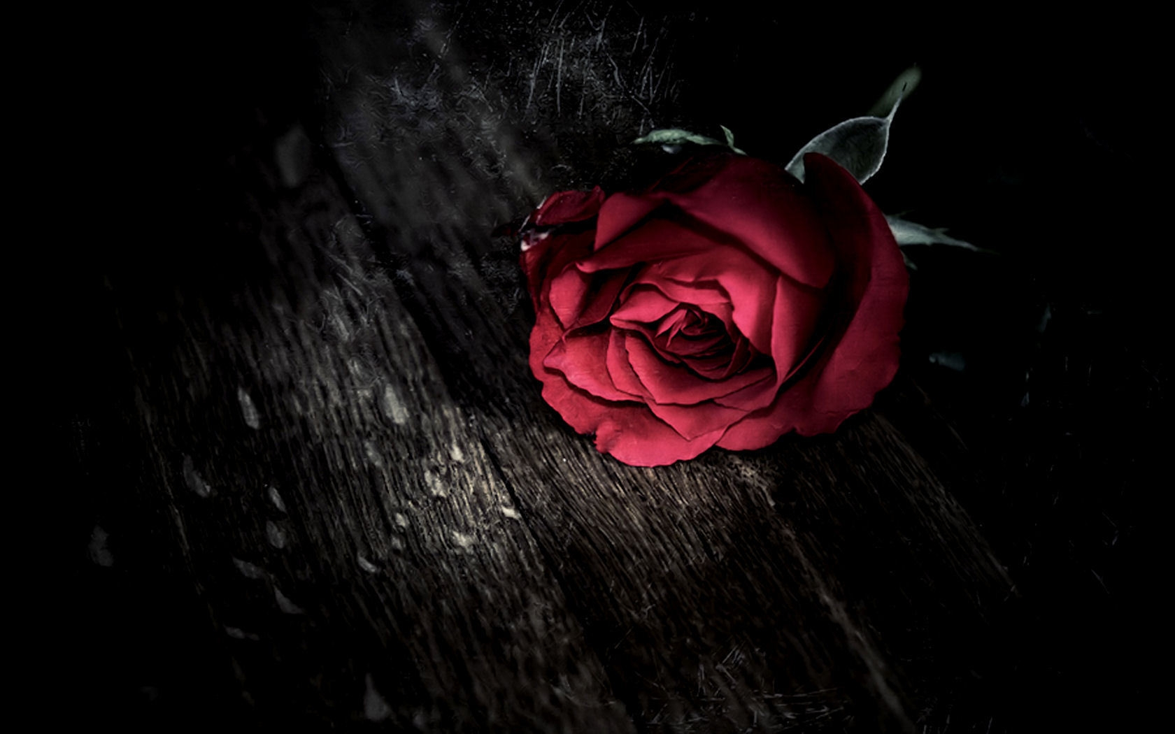 cool-rose-HD-Download-cool-rose-Download-cool-rose-HD-Download-wallpaper-wp3404198