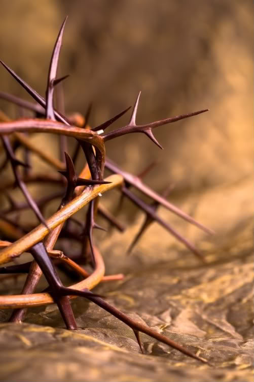 crown-of-thorns-wallpaper-wp5604121