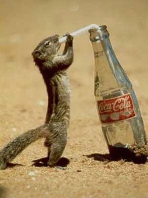 cute-animal-pictures-Cute-Animal-Pictures-wallpaper-wp5006380