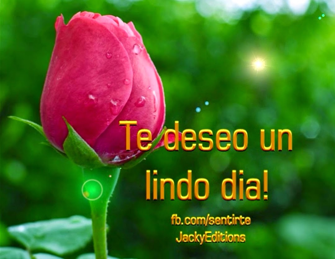 descarga-o-comparte-esta-bella-rosa-ya-wallpaper-wp3604755