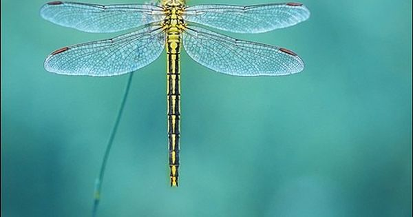 dragonfly-wallpaper-wp5006926