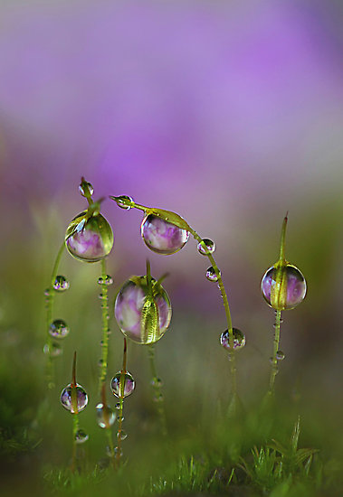 droplets-wallpaper-wp4806090