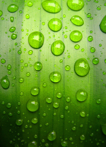 drops-on-green-wallpaper-wp4806092