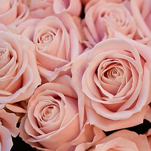 edbfcbcb-rose-shop-pink-roses-wallpaper-wp5604549