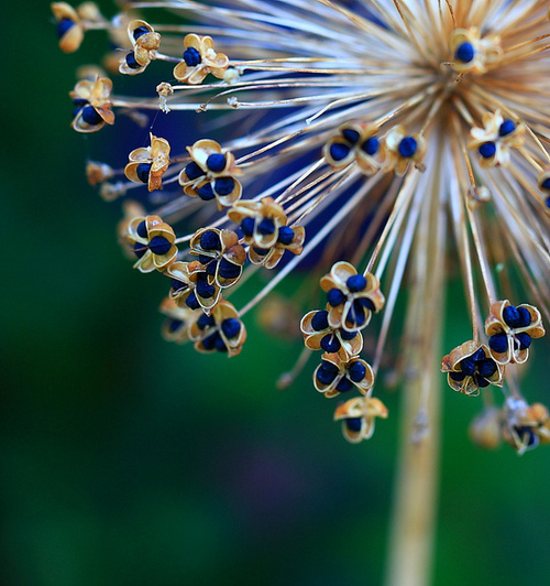 eefeaceecaacaaa-seed-pods-macro-photography-wallpaper-wp5604574