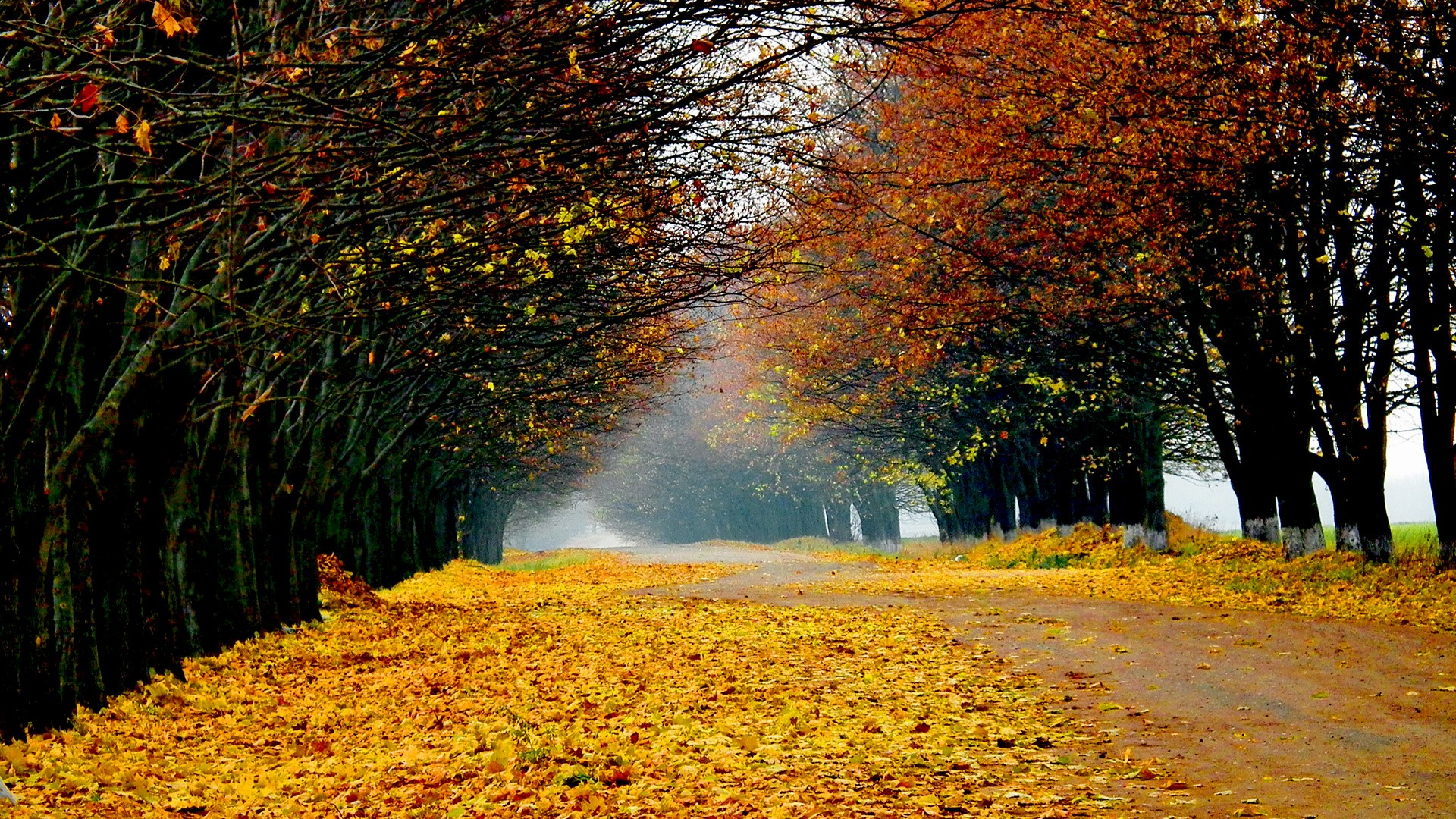 fall-full-hd-1920x1080-wallpaper-wp3405359