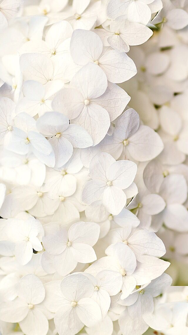 flower-iphone-wallpaper-wp58010624