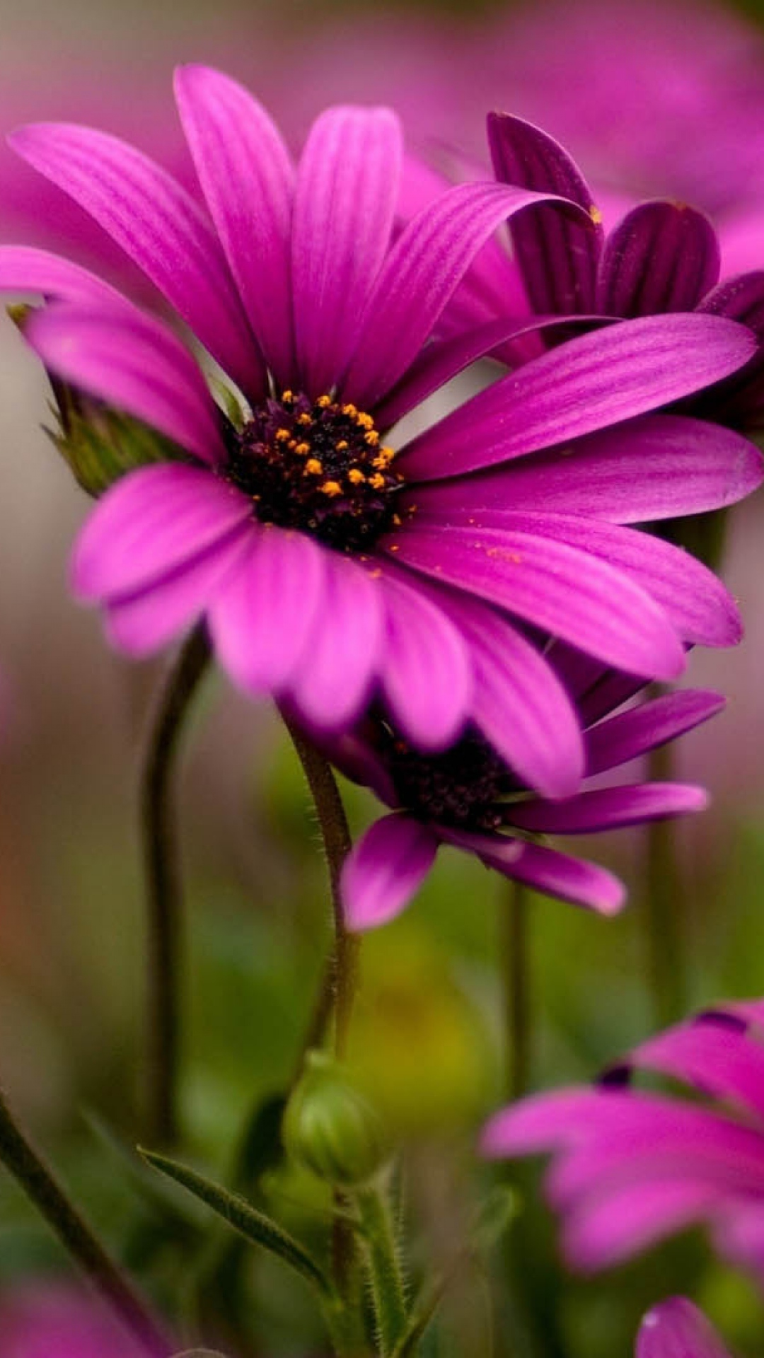 flowers-plants-petals-wallpaper-wp3405655