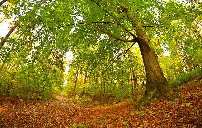 forest-summer-nature-plants-trail-wallpaper-wp5604938