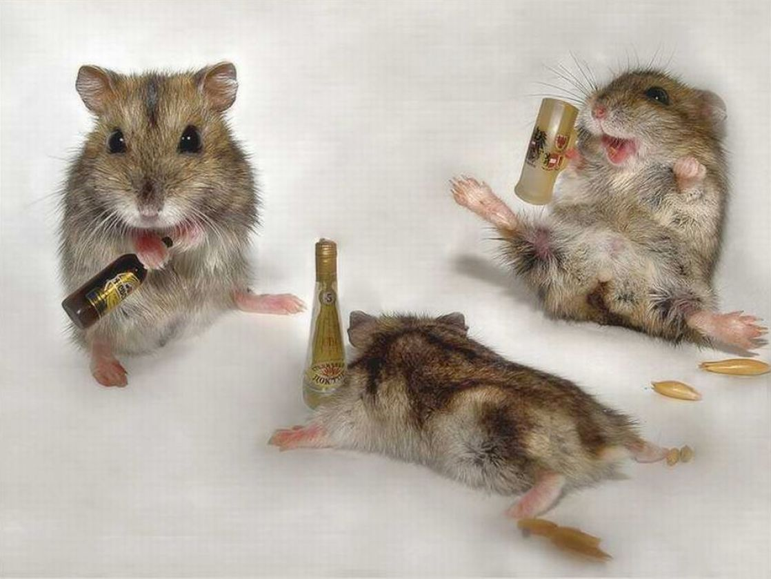 funniest-pictures-Funny-pictures-of-drunk-animals-pictures-wallpaper-wp5007831