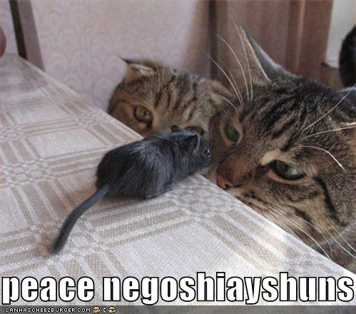 funniest-pictures-cute-and-funny-cat-part-wallpaper-wp5007827