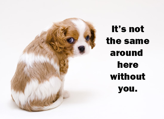 i-miss-mom-MyFunCards-Miss-You-Puppy-Send-Free-Friendship-eCards-Miss-You-wallpaper-wp5406001