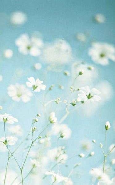 iPhone-flowers-wallpaper-wp426600-1