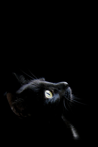 iphone-pics-profile-of-tiny-black-kitten-on-black-background-wallpaper-wp426624
