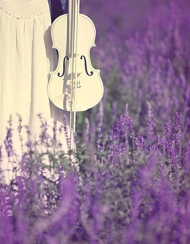 lavender-wallpaper-wp5009712