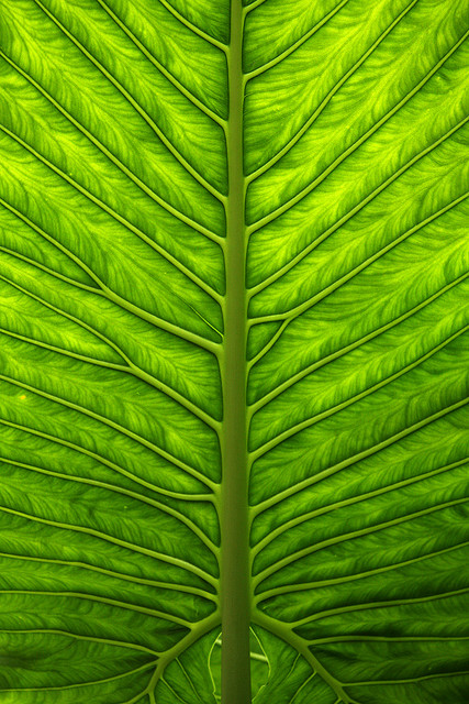 leaf-wallpaper-wp480468