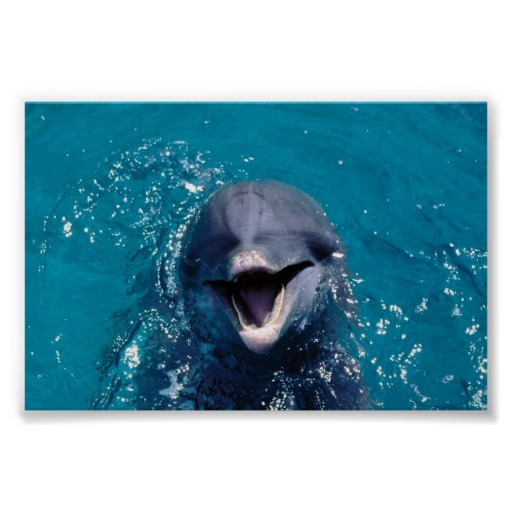 quality-product-Happy-Dolphin-Print-Happy-Dolphin-Print-In-our-offer-link-abo-wallpaper-wp3002814