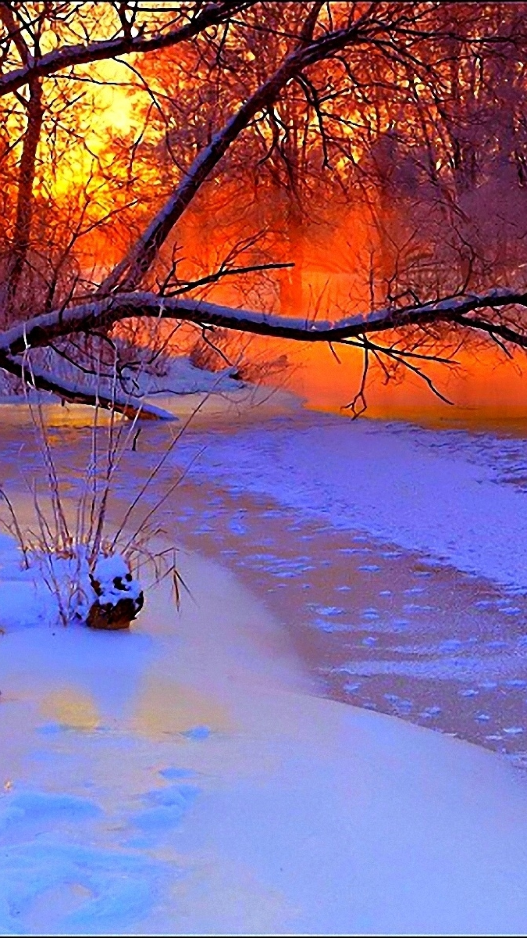 1080x1920-winter-sunset-evening-branches-tree-pond-cold-snow-wallpaper-wp360638