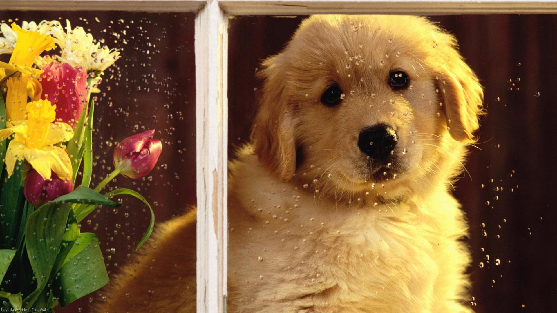1920x1080-widescreen-hd-cute-wallpaper-wpc5801066