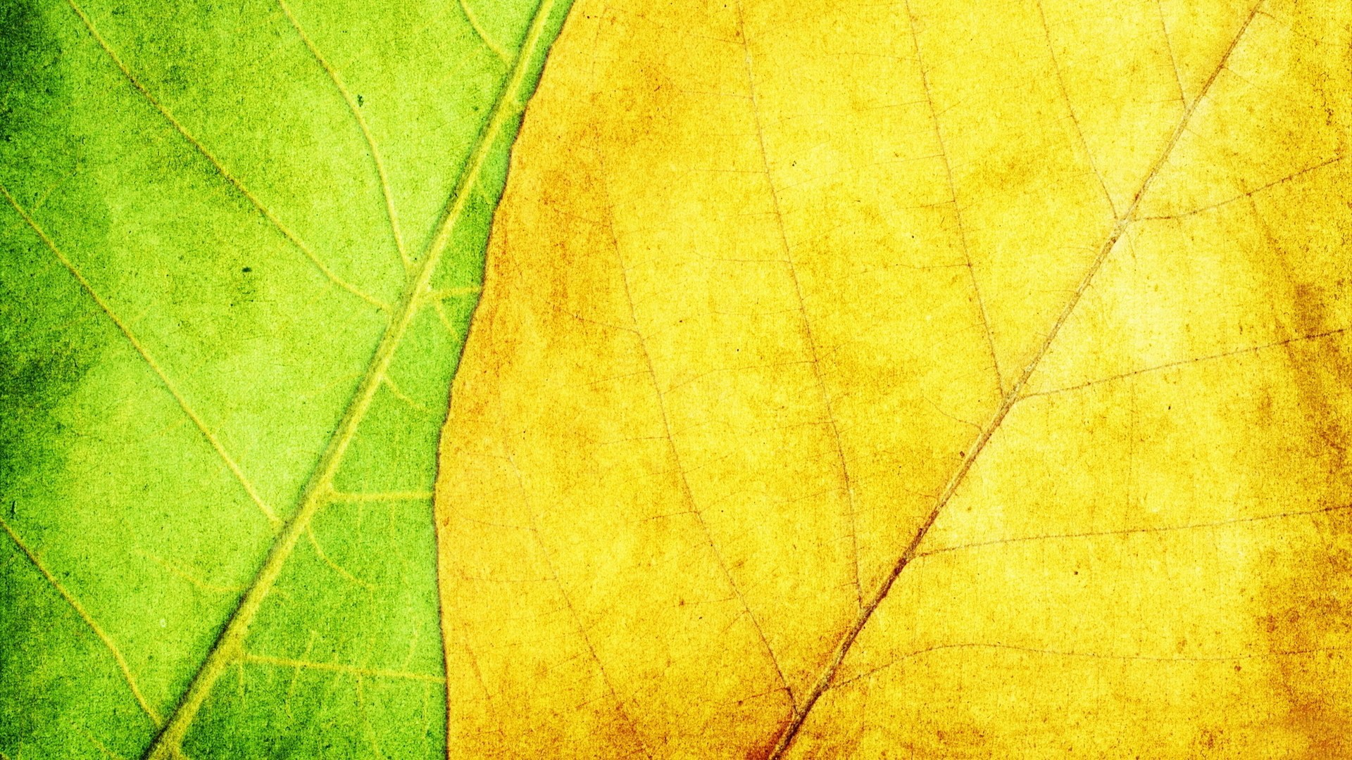 1920x1080px-leaf-for-mac-computers-by-Greydon-Turner-wallpaper-wpc9001179