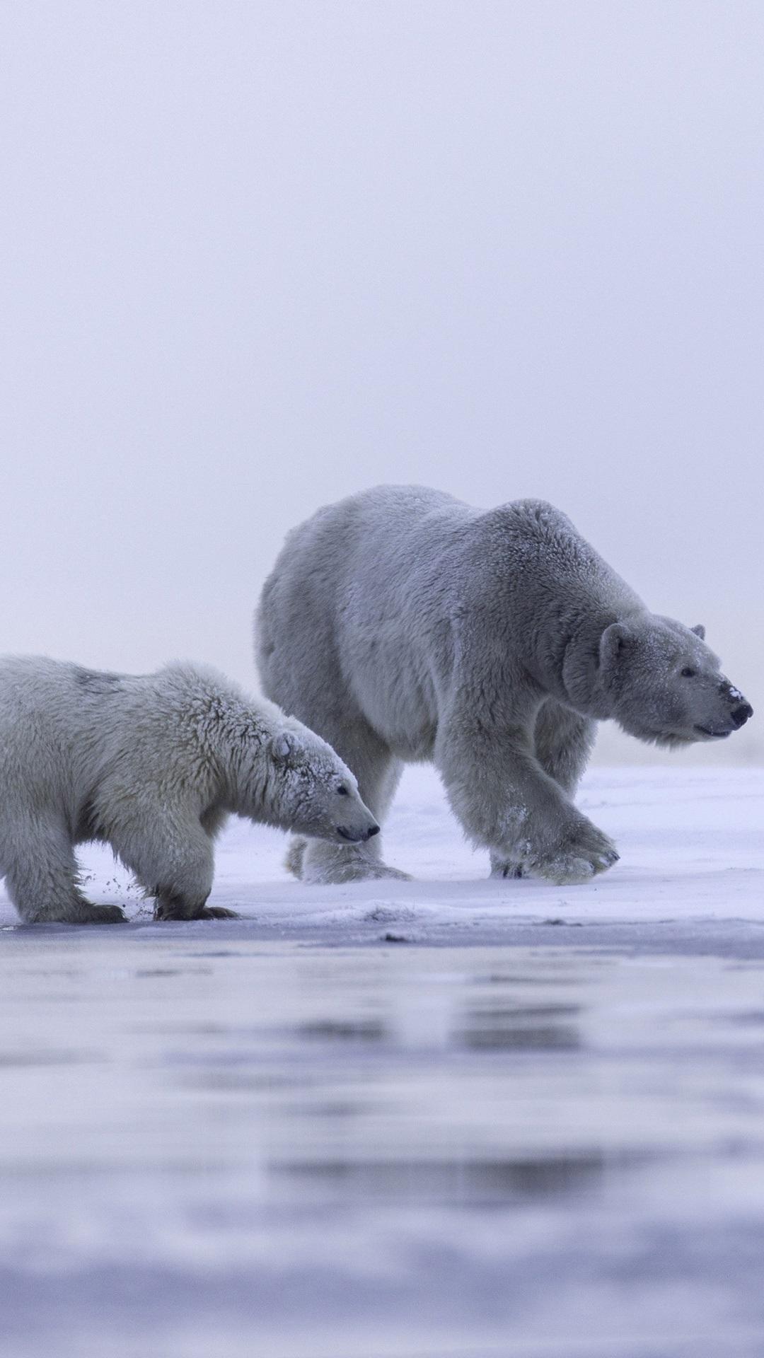 Alaska-polar-bear-family-ice-snow-iPhone-S-Plus-1080x1920-wallpaper-wp3602335