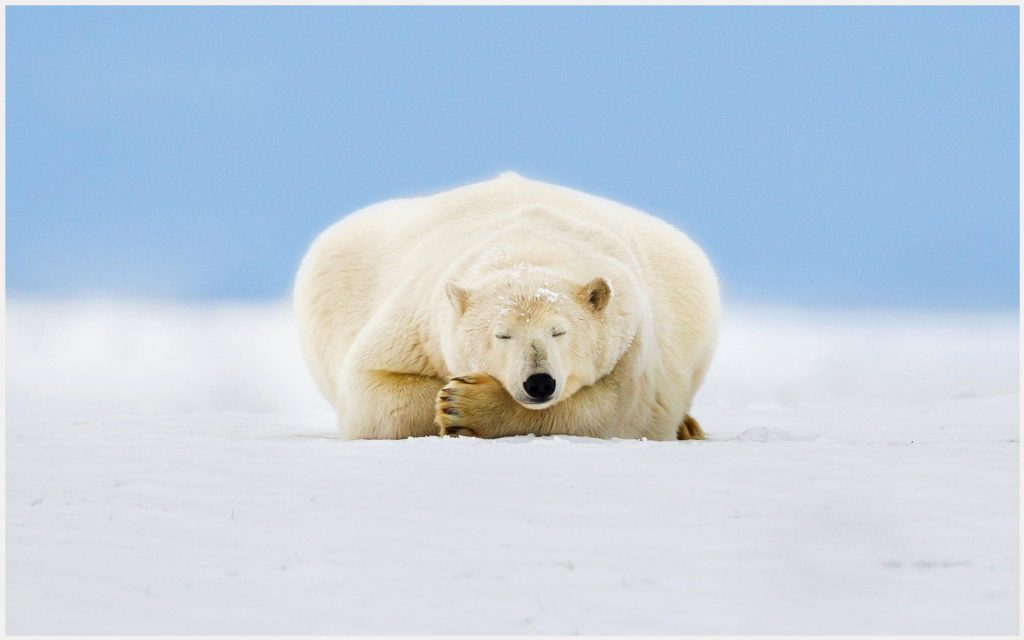 Alaskan-Sleeping-Bear-alaskan-sleeping-bear-1080p-alaskan-sleeping-bear-wallp-wallpaper-wp3602336