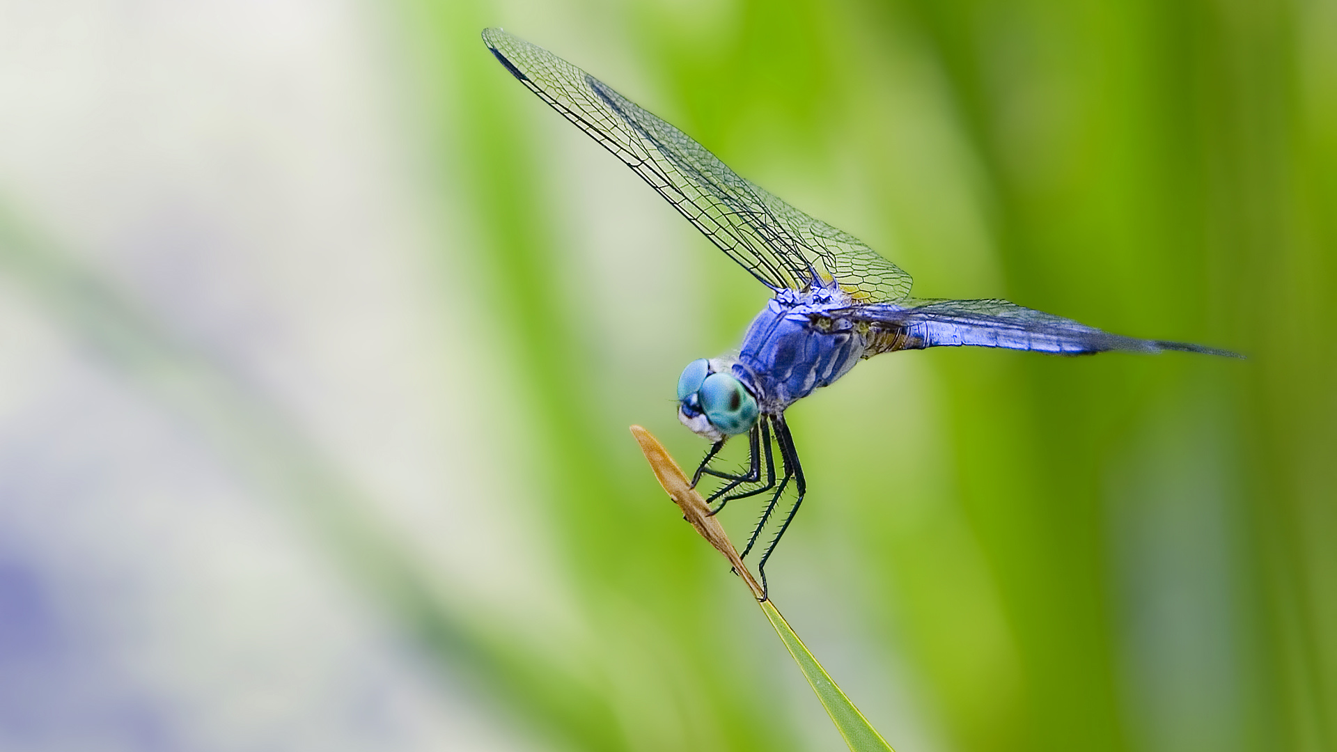 Animal-Dragonfly-wallpaper-wp3802398