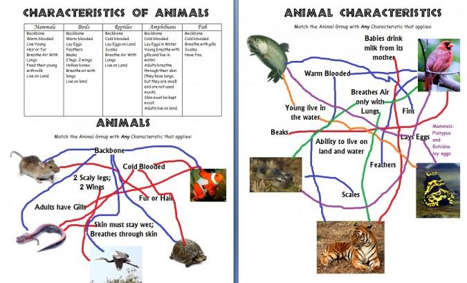 AnimalCharacteristicsAnswers-wallpaper-wp3602498