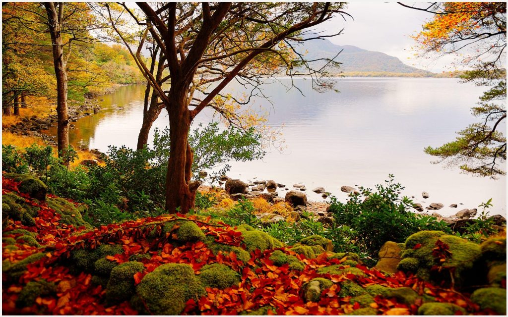 Autumn-Forest-Lake-Beautiful-Scenery-autumn-forest-lake-beautiful-scenery-1080-wallpaper-wp3602817