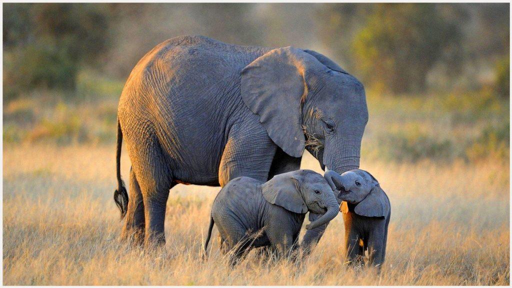 Baby-Elephants-With-Mother-Cute-baby-elephants-with-mother-cute-1080p-baby-el-wallpaper-wpc9002518