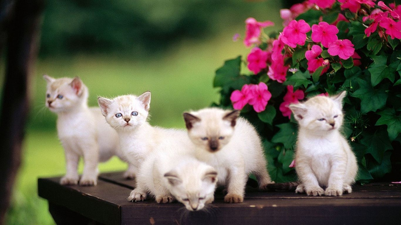 Beautiful-Cat-HD-Pictures-One-HD-Pictures-wallpaper-wpc5802640