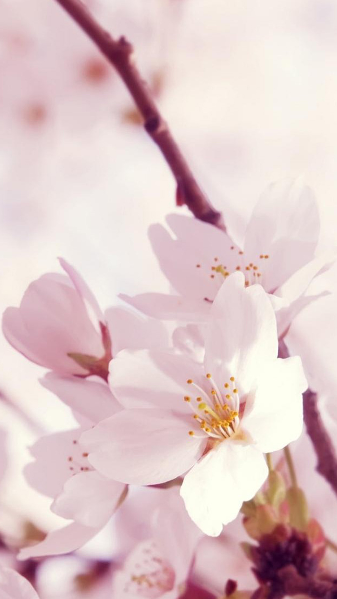 Beautiful-Chinese-Asia-flowers-Sakura-Plum-Blossoms-Lotus-iPhone-collection-mobile-wallpaper-wpc9002689