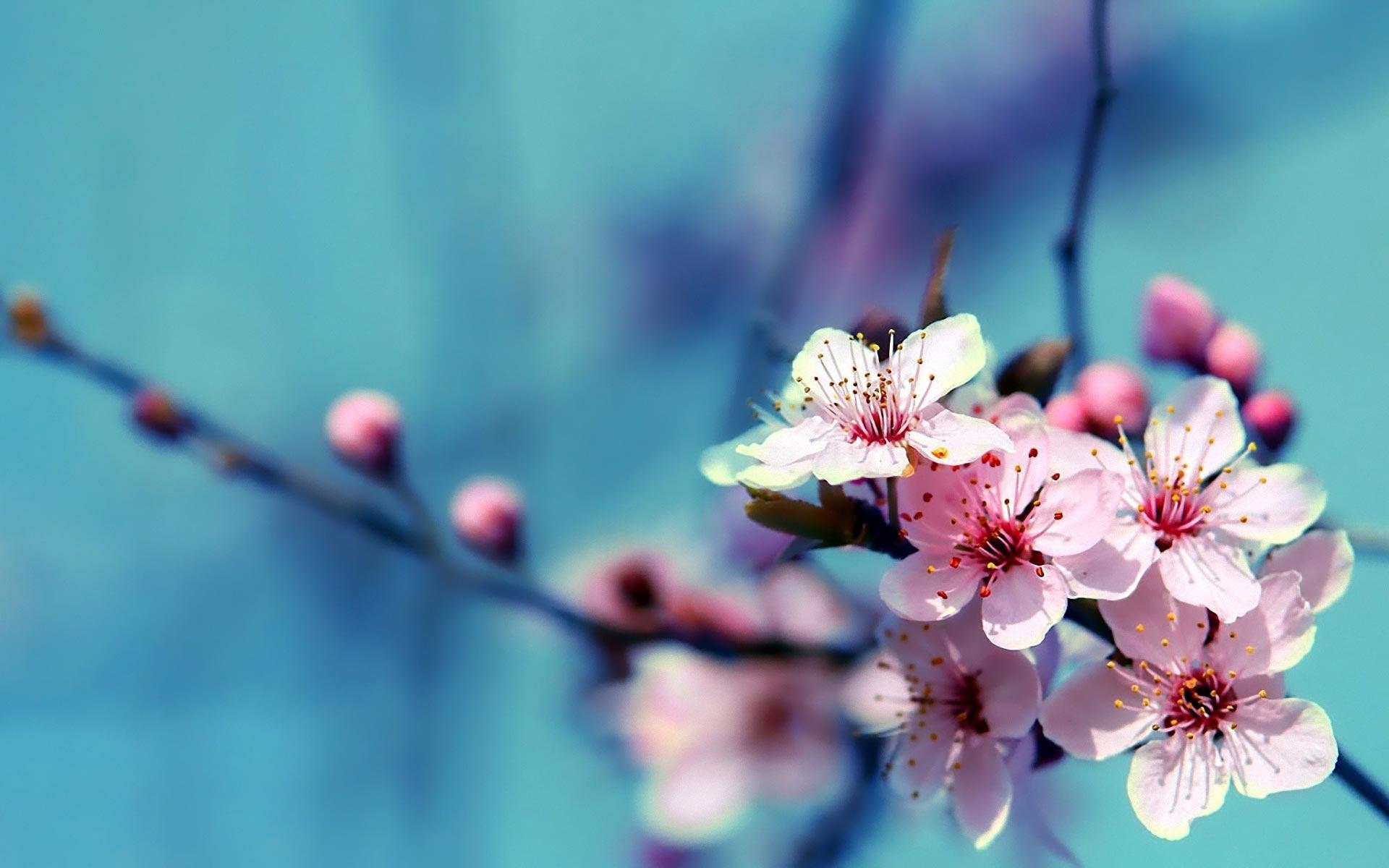 Beautiful-Free-HD-Flower-DesignMaz-wallpaper-wpc9002699