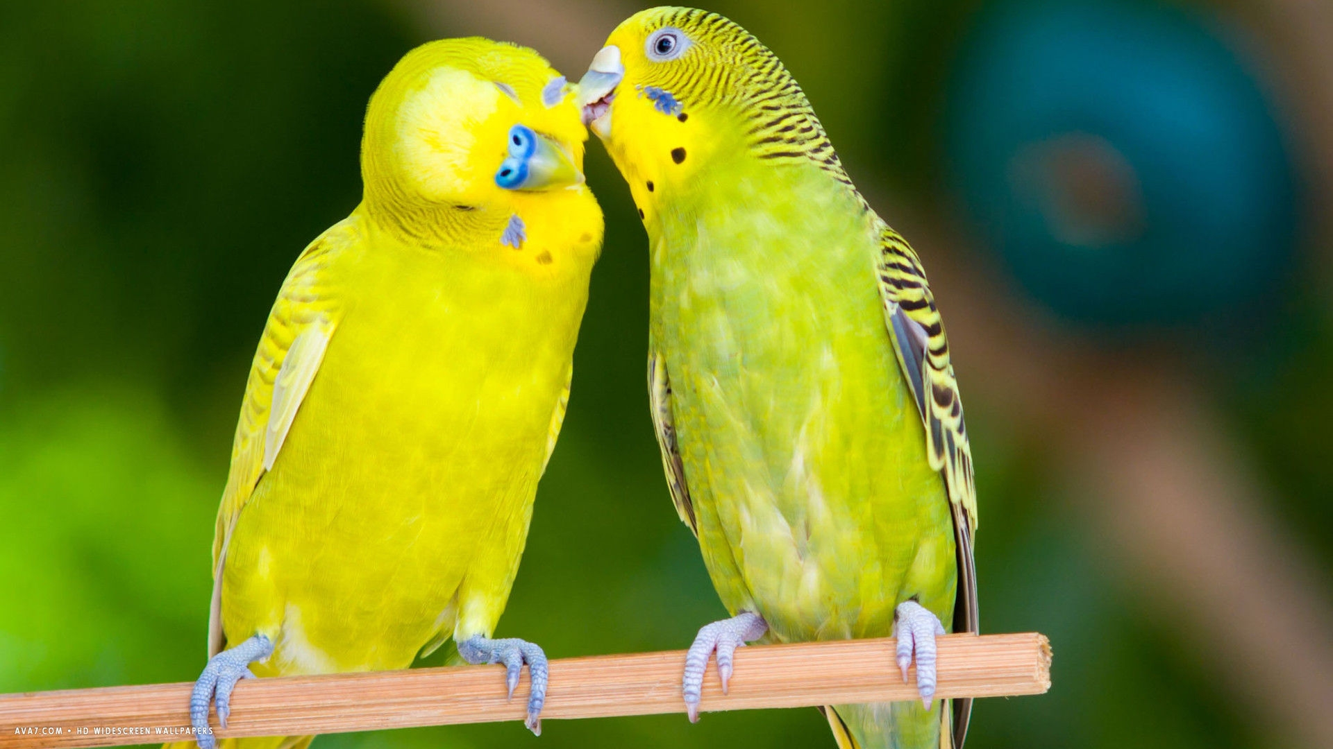 Best-images-of-love-birds-hd-Cute-Love-Bird-Colorful-Parrot-Hd-inside-Images-Of-Love-wallpaper-wpc5802791